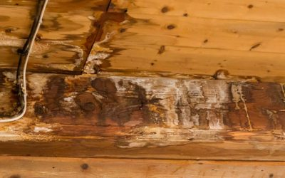 Must Know Tips for Repairing Water Damage from a Roof Leak
